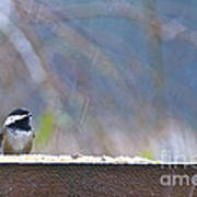 Chestnut-backed Chickadee In The Rain Poster