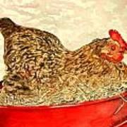 Chicken Hen Painting Art Print Poster