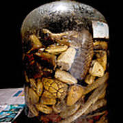 Chinese Snake Wine Poster