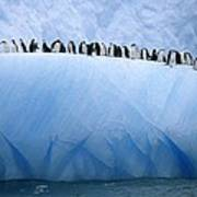 Chinstrap Penguins Lined Poster