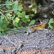 Chipmunk On A Log Poster