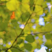 Chlorophyll Daydream Poster
