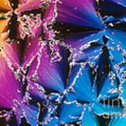 Cholesteryl Benzoate Crystal Poster