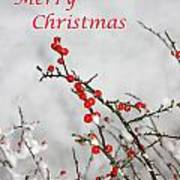 Christmas Berries Poster