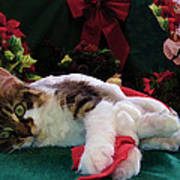 Christmas Joy W Kitty Cat - Kitten W Large Eyes Daydreaming About Xmas Gifts - Framed W Poinsettias Poster