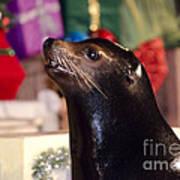 Christmas Sea Lion Poster