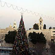 Christmas Tree In Manger Square Bethlehem Poster