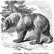 Cinnamon Bear Poster