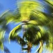 Circular Palm Blur Poster