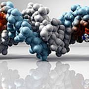 Cisplatin Cancer Drug And Dna Molecule Poster by Phantatomix