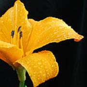 Citrus Rain II Poster