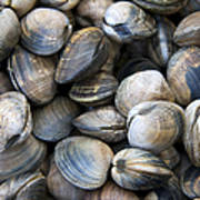 Clam Shell Background Poster