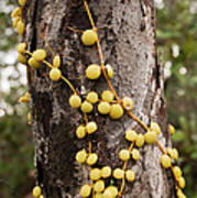 Climbing Plant On A Tree Trunk Poster
