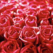 Close-up Of A Mass Of Red Roses Poster by Stockbyte