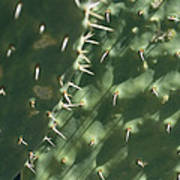 Close-up Of A Prickly Pear Cactus Poster
