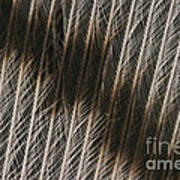 Close-up Of A Turkey Feather Poster