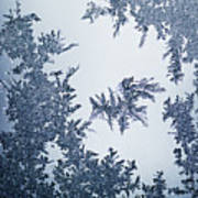 Close Up Of Ice Crystals Poster