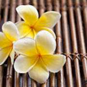 Close-up Of Pink Plumeria Flower Poster