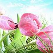 Close-up Of  Spring Tulips  Poster