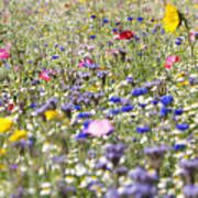 Close Up Of Vibrant Wildflowers In Sunny Field Poster