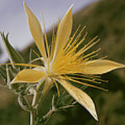 Close-up View Of A Blazing Star Poster