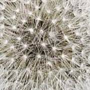 Close View Of A Dandelion Seed Head Poster