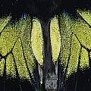 Close View Of Iridescent Moth Wings Poster