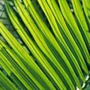 Close View Of Palm Fronds Poster