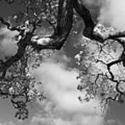Cloudy Oak Poster