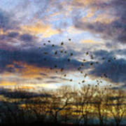 Cloudy Sunset With Bare Trees And Birds Flying Poster