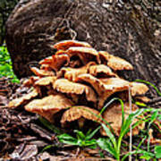Cluster Fungus Poster