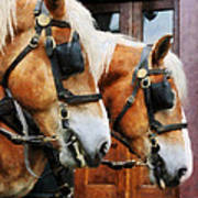 Clydesdale Closeup Poster