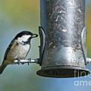 Coal Tit On Feeder Poster