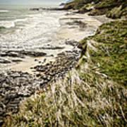 Coastal Grass Poster