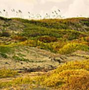 Coastal Plants On Dunes Poster
