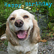 Cocker Spaniel Birthday Poster