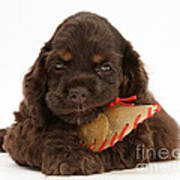 Cocker Spaniel Pup With Chew Treat Poster