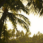 Coconut Palm Trees On The Coast Poster