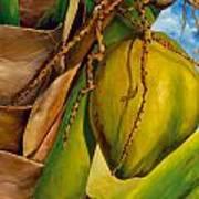 Coconuts Serie 2 Poster by Jose Romero