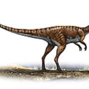 Coelophysis Bauri, A Prehistoric Era Poster