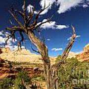 Cohab Canyon At Capitol Reef Poster