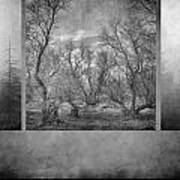 Collage Misty Trees Poster