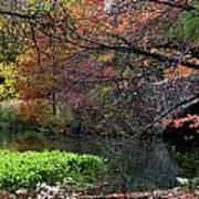 Color Splash In Central Park Poster