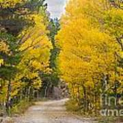 Colorado Autumn Aspen Road Boulder County Poster