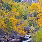 Colorado Rocky Mountain Autumn Canyon View Poster