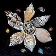 Colored Seashells Poster