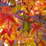 Colorful Autumn Leaves Art Prints Trees Poster
