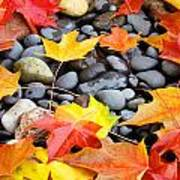Colorful Autumn Leaves Prints Rocks Poster
