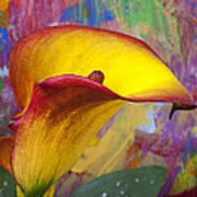 Colorful Calla Lily Poster