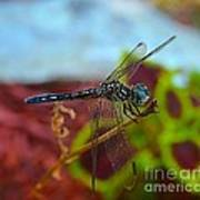 Colorful Dragon Fly Poster